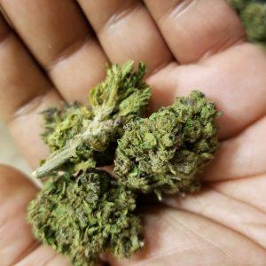 Blue Mystic Cannabis Strain