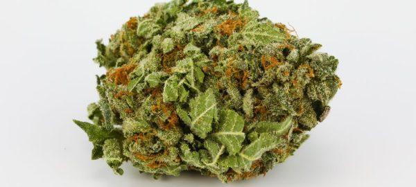 Marijuana-Strain