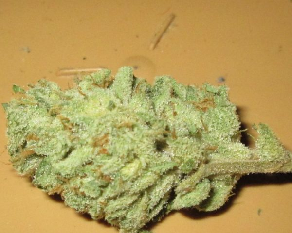 Buy Cinex Marijuana Strain