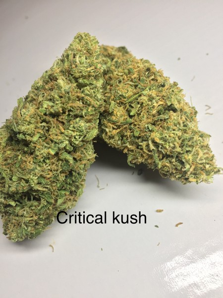 Critical Kush | Marijuana Strain