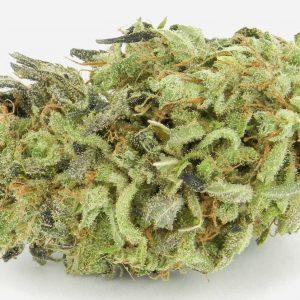 Durban Poison - Sativa Cannabis Strain