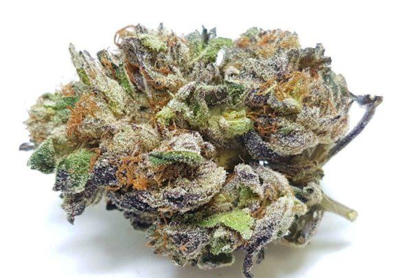 Buy Purple Urkle, purple urkle strain thc level