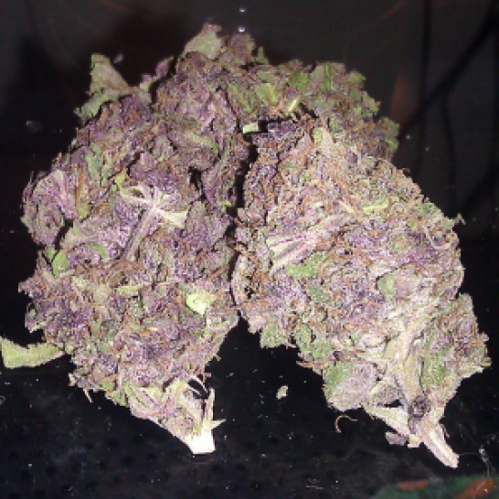 purple-kush, Buy Purple Kush Weed