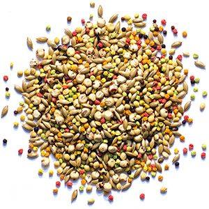 sensible-seed