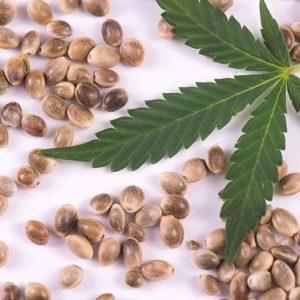 Weed Seeds