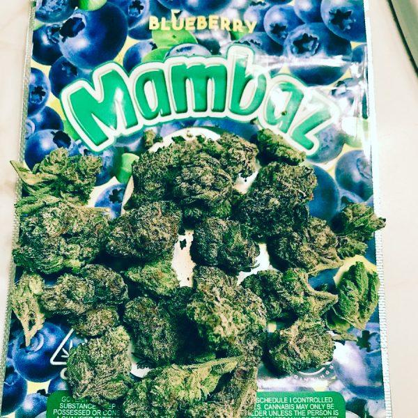 blueberry mambaz strain