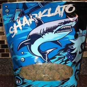 shark gelato strain